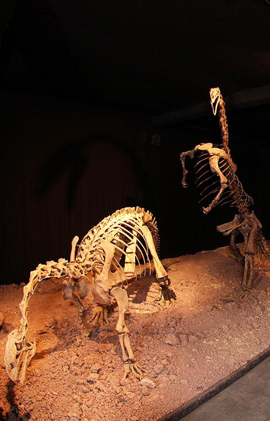museum-auberlehaus-trossingen-dinosaurier-homeseite